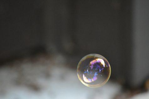 Trees Reflect Off A Bubble