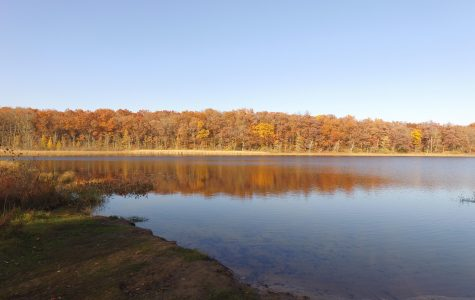Trees Reflect on Pickerel Lake
