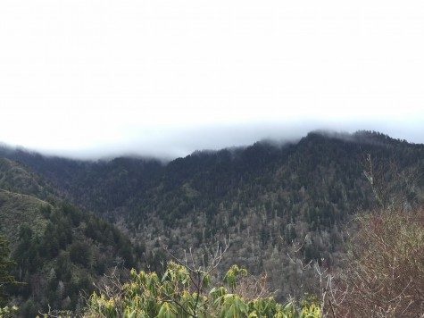 The Mount LeConte and Alum Cave Trail Hike , 5.5 miles each way, offered views of surrounding mountains shrouded in the mist that gives them their names.