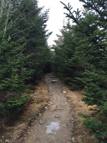 Spruce and fir trees line the last mile to the 6,000 foot summit, the tallest mountain in the Appalachian range. Past this point, Cliff Top rock provides Mount LeConte's best outlooks.