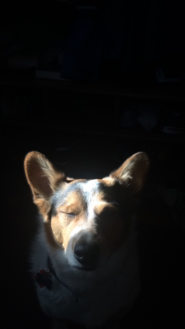 Sparky, a resident of Ann Arbor, sits in a beam of sunlight.