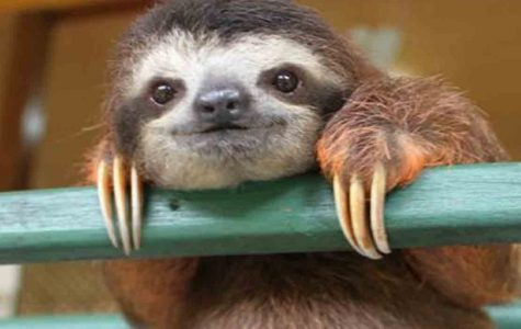 Harness the Sloth in Four Easy Steps